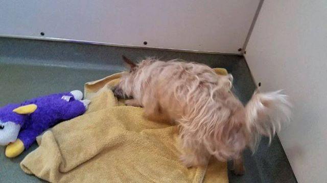 WAGS dog oscar adoption