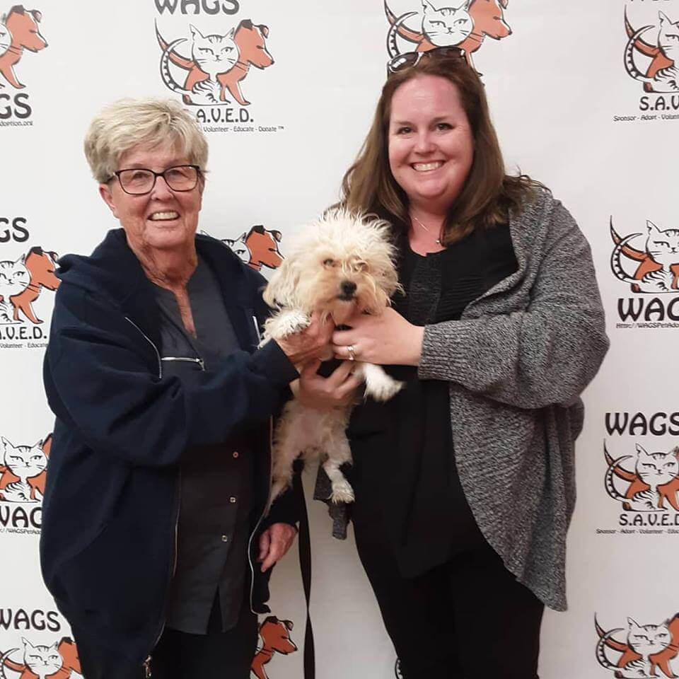 WAGS stewart dog adopted WAGS
