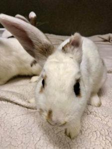 cute rabbit adoption at WAGS