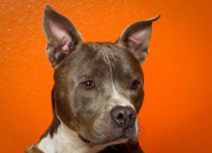WAGS dog photography