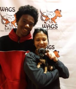 little puppy guy was adopted WAGS