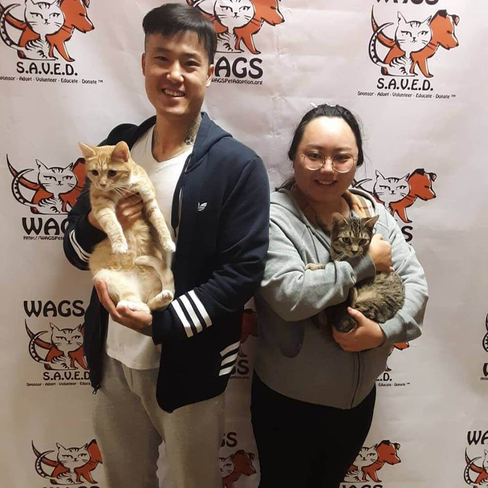 2 cats were lucky to adopt at WAGS