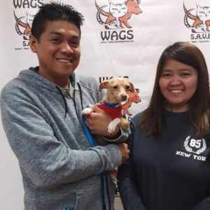 lucky little guy adopted WAGS dog