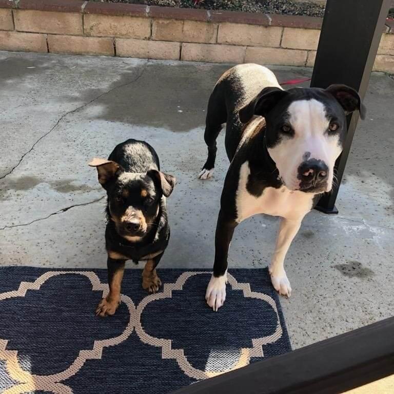 2 dog WAGS need adoption