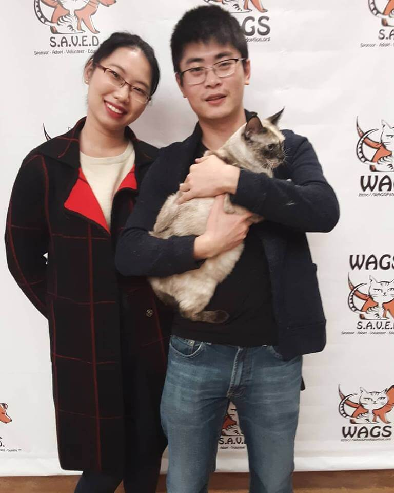 sweet big cat adopted WAGS