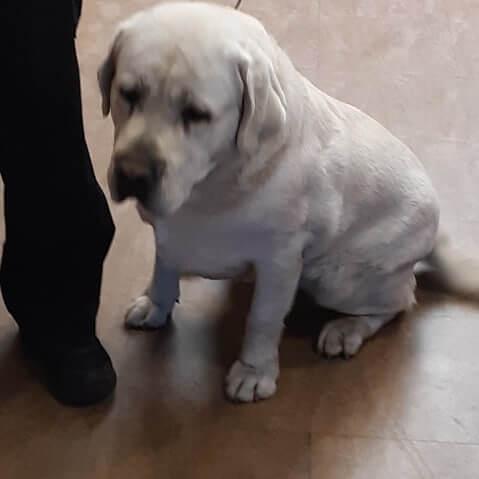 sad dog found by WAGS