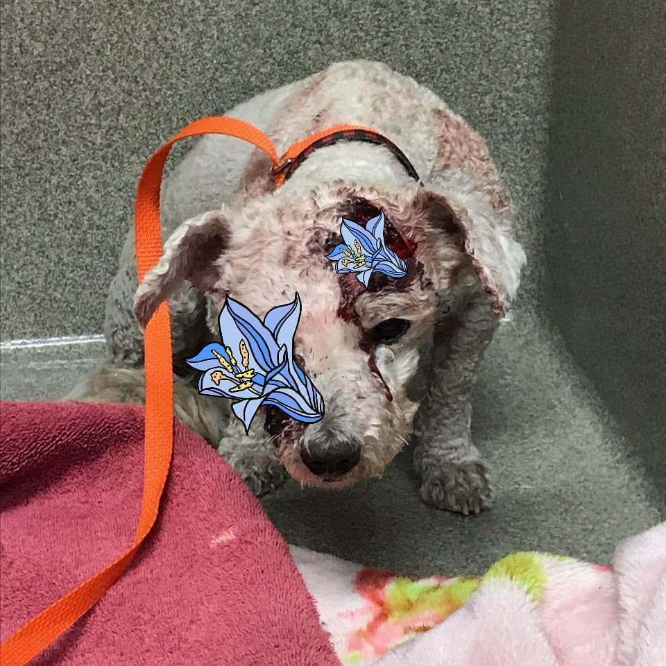 dog hit by a car found by WAGS