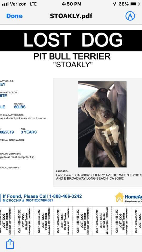 lost dog pitbull terrier WAGS