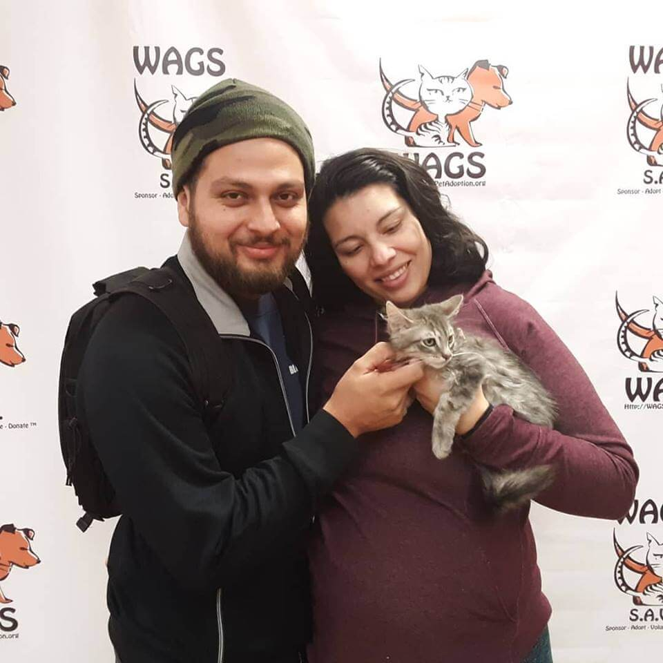 sweet kitten adopted by couple WAGS