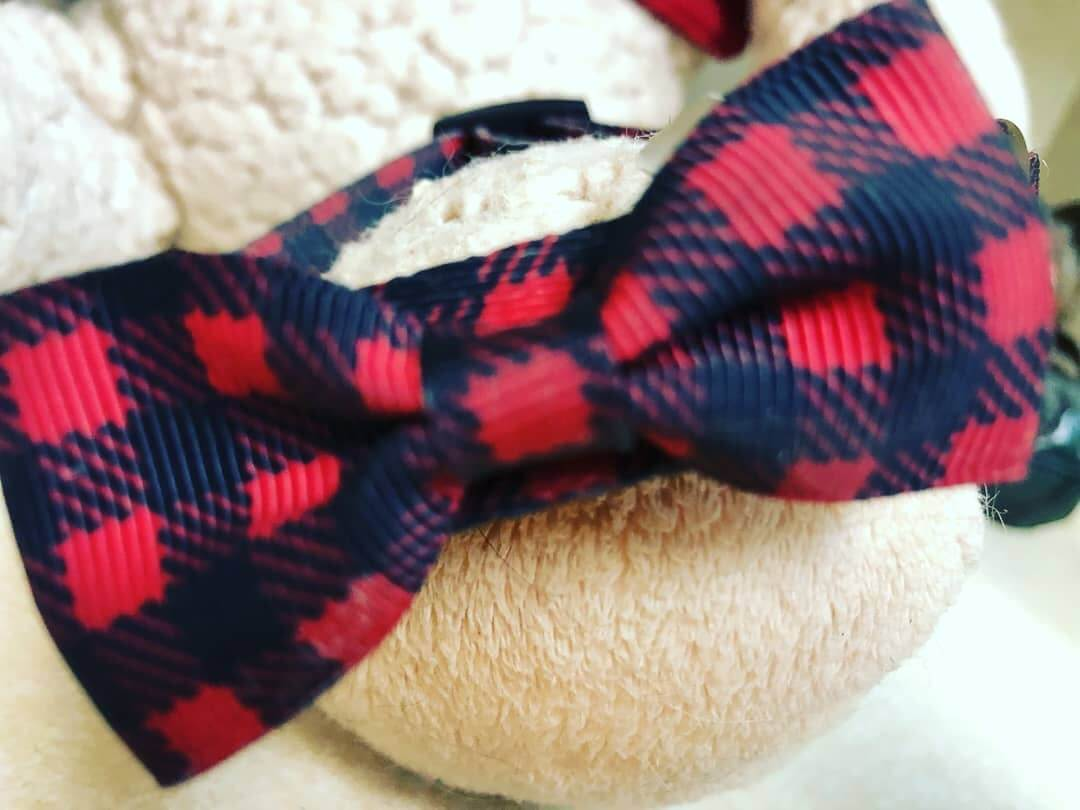 little dog ribbon