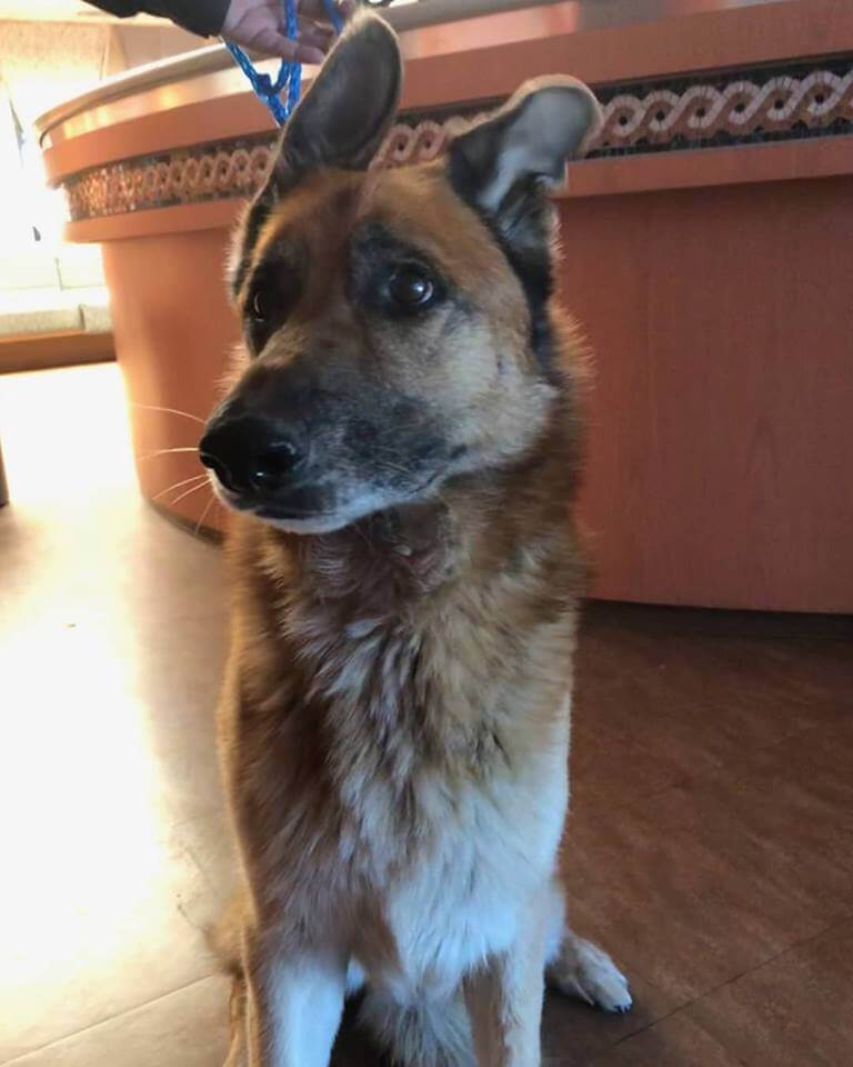 WAGS found dog on bushard