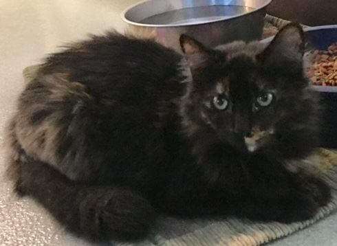 Cupcake 1-2 year old female