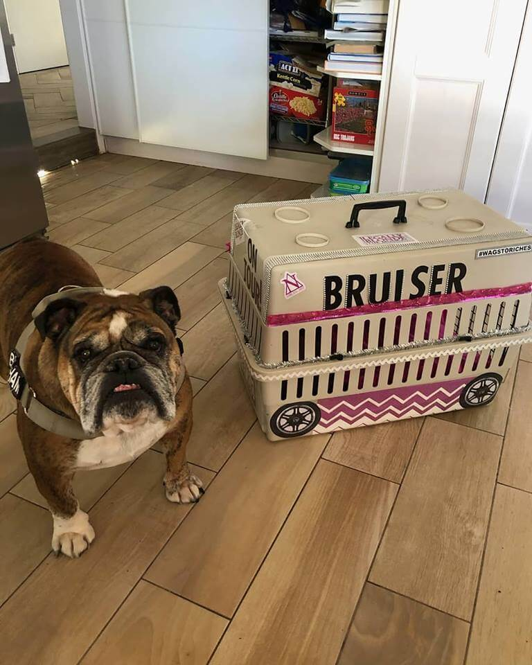 brusier dog cage WAGS