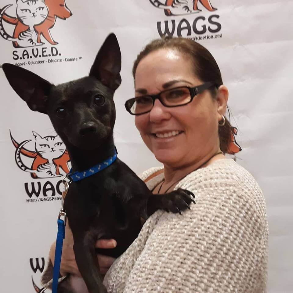 gorgoeus dog adopt WAGS