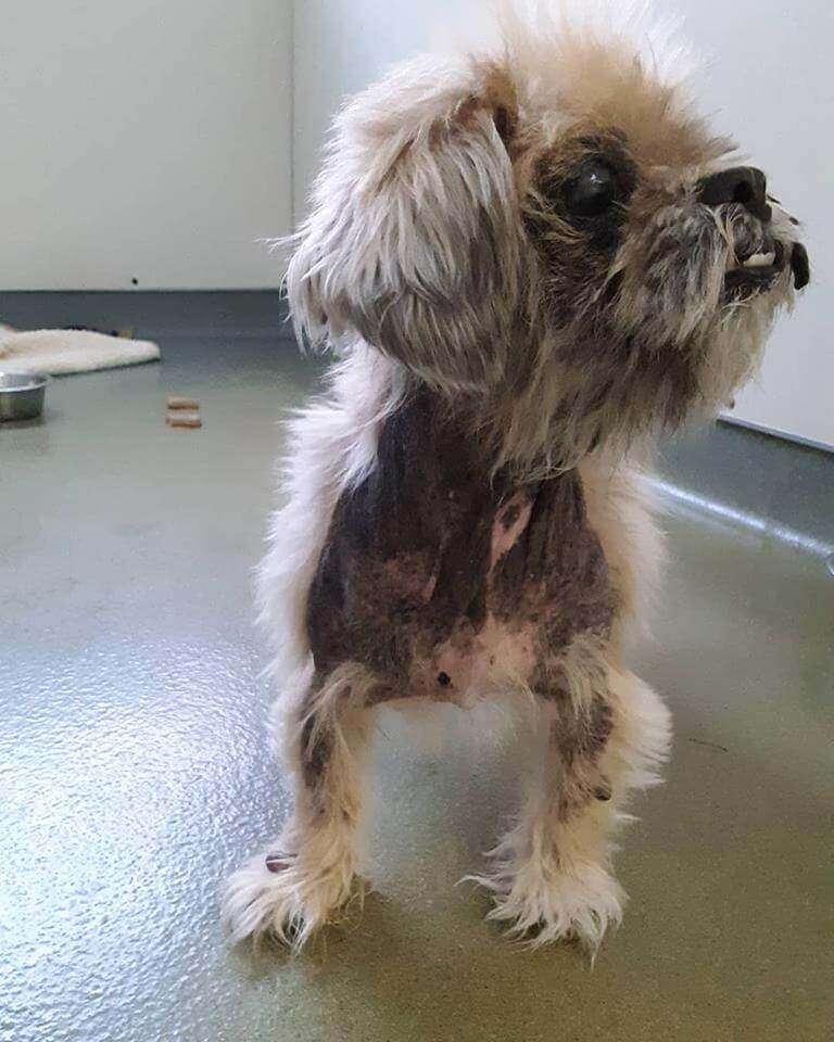 senior pet dog abandon at WAG