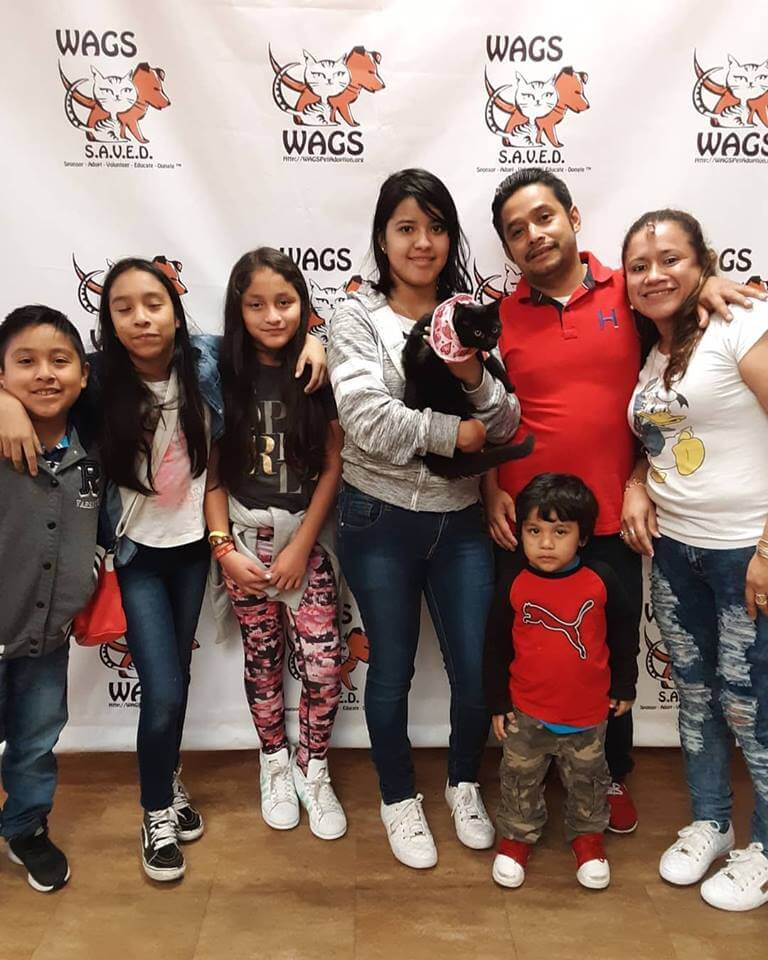 big family adopt a cat at WAGS