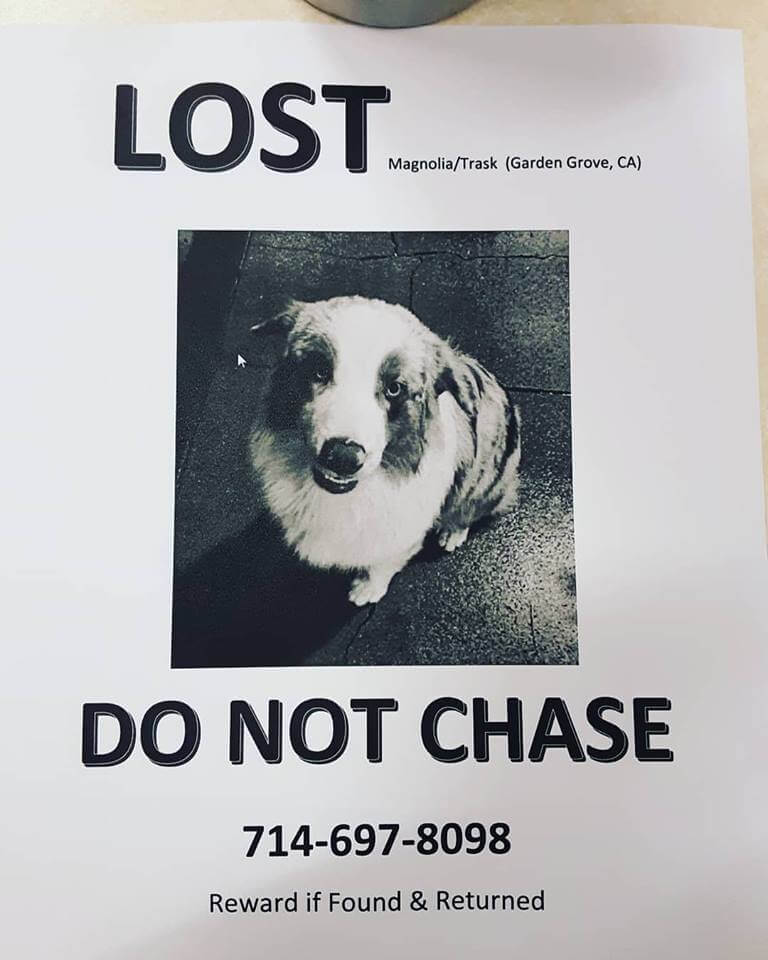 lost dog courtesy post