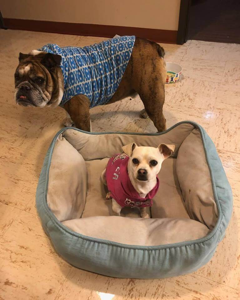 2 dogs for rehearsal cast show WAGS