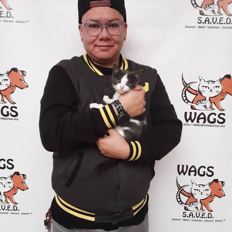 little kitten is now adopted WAGS