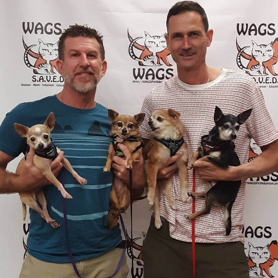 lovely dogs chuhuahua adopted WAGS