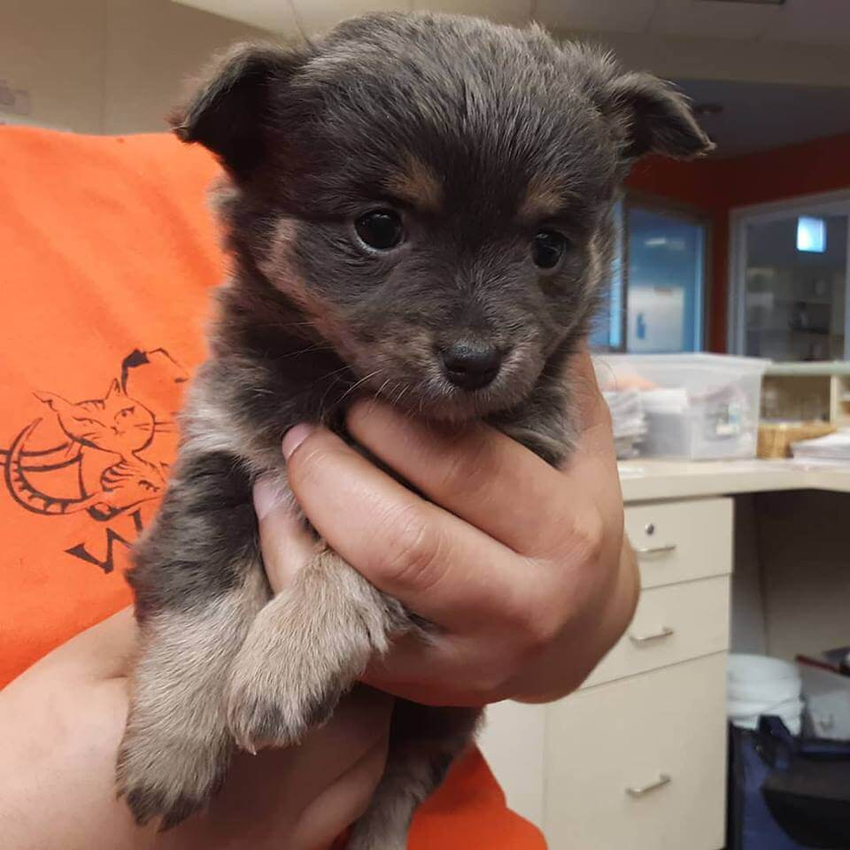 cute little puppy for adoption WAGS