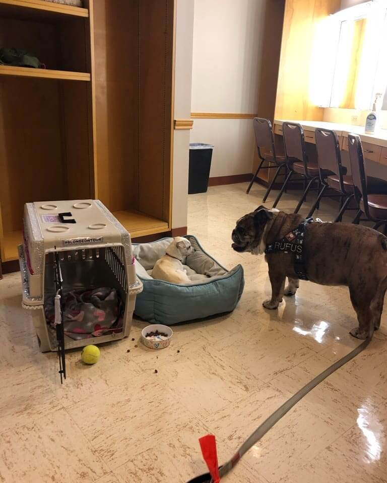 WAGS 2 dogs for adoption