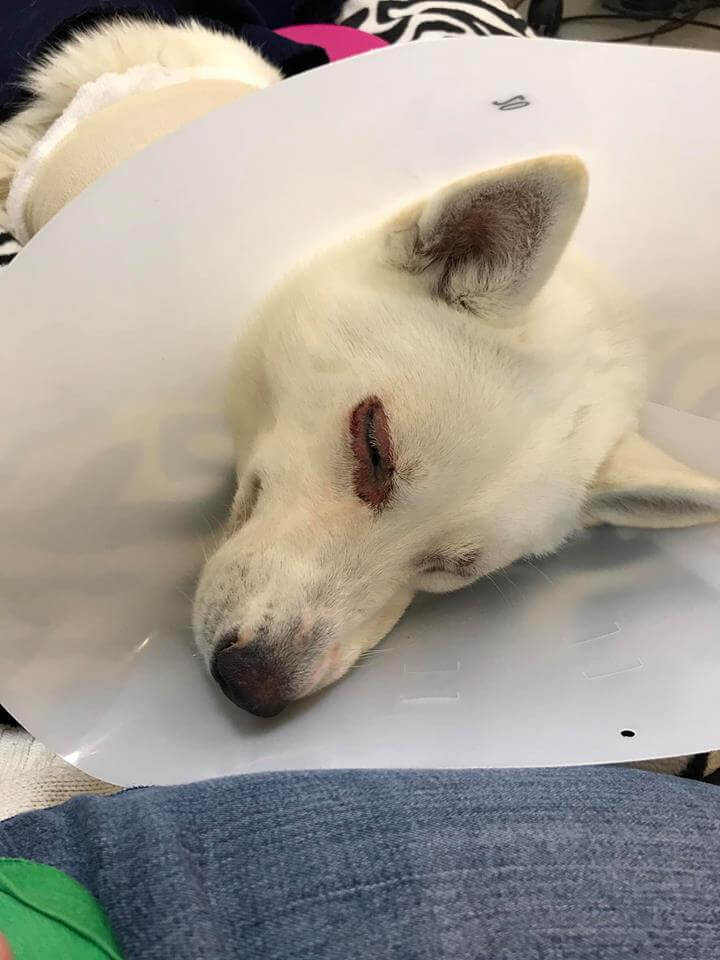 WAGS dog hiccup successfully surgery