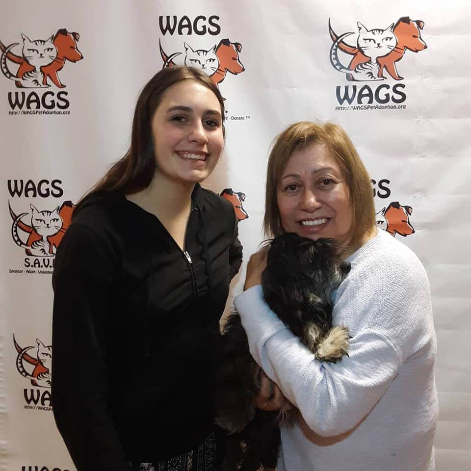 lovely dogs adopt by two ladies WAGS