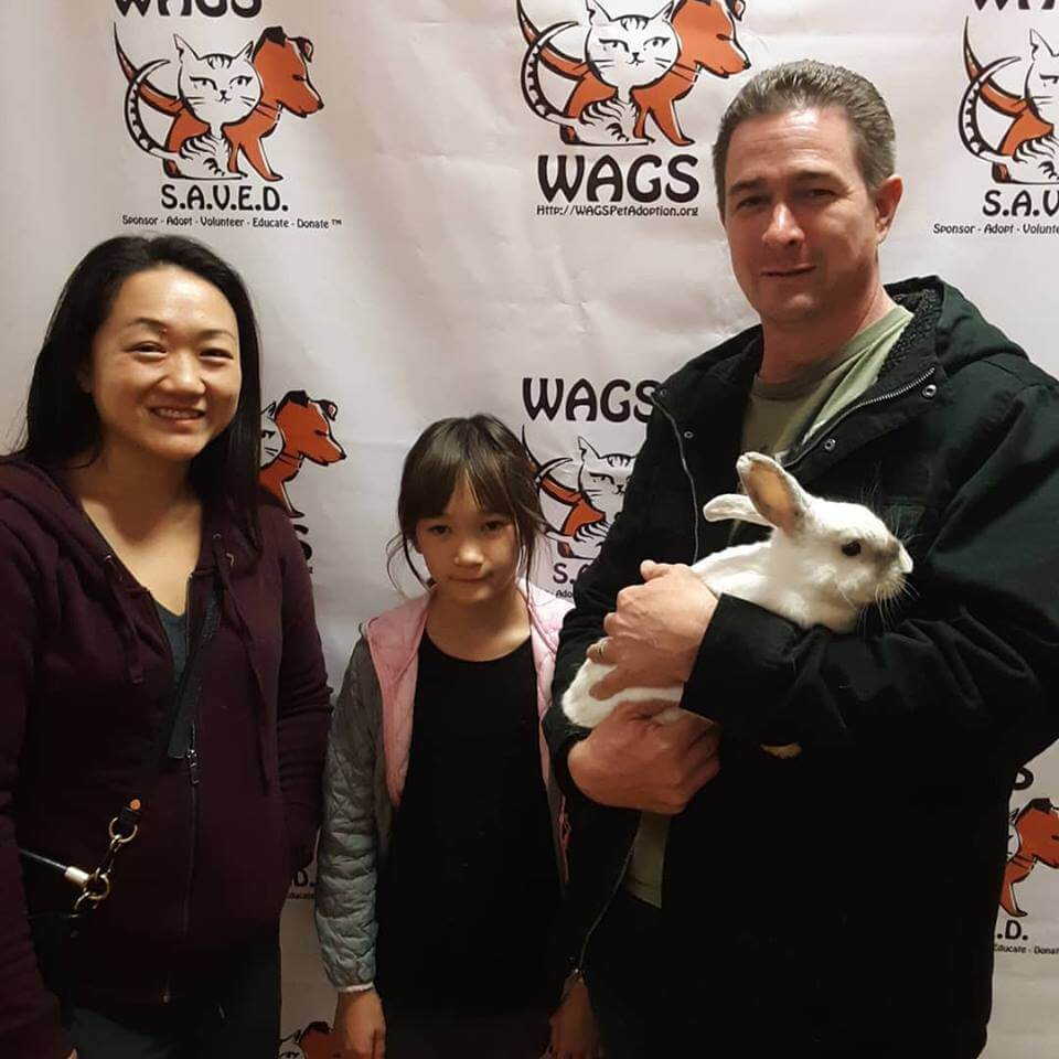 parents and their daughter adopt a rabbit WAGS
