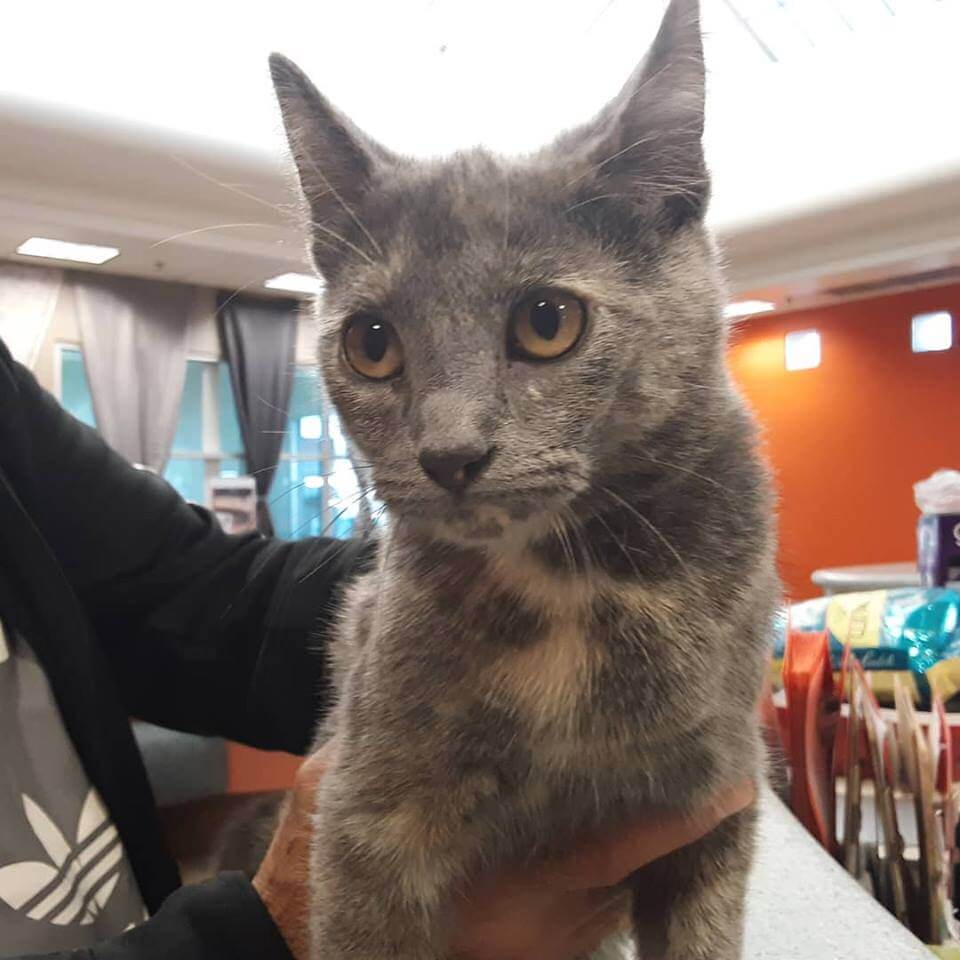 5 month old female cat found by WAGS