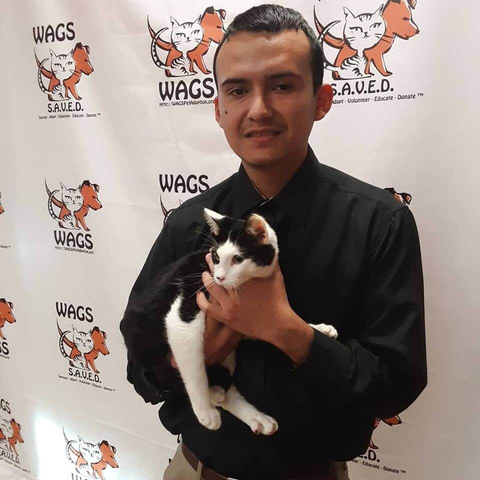 guy adopts a cat at WAGS