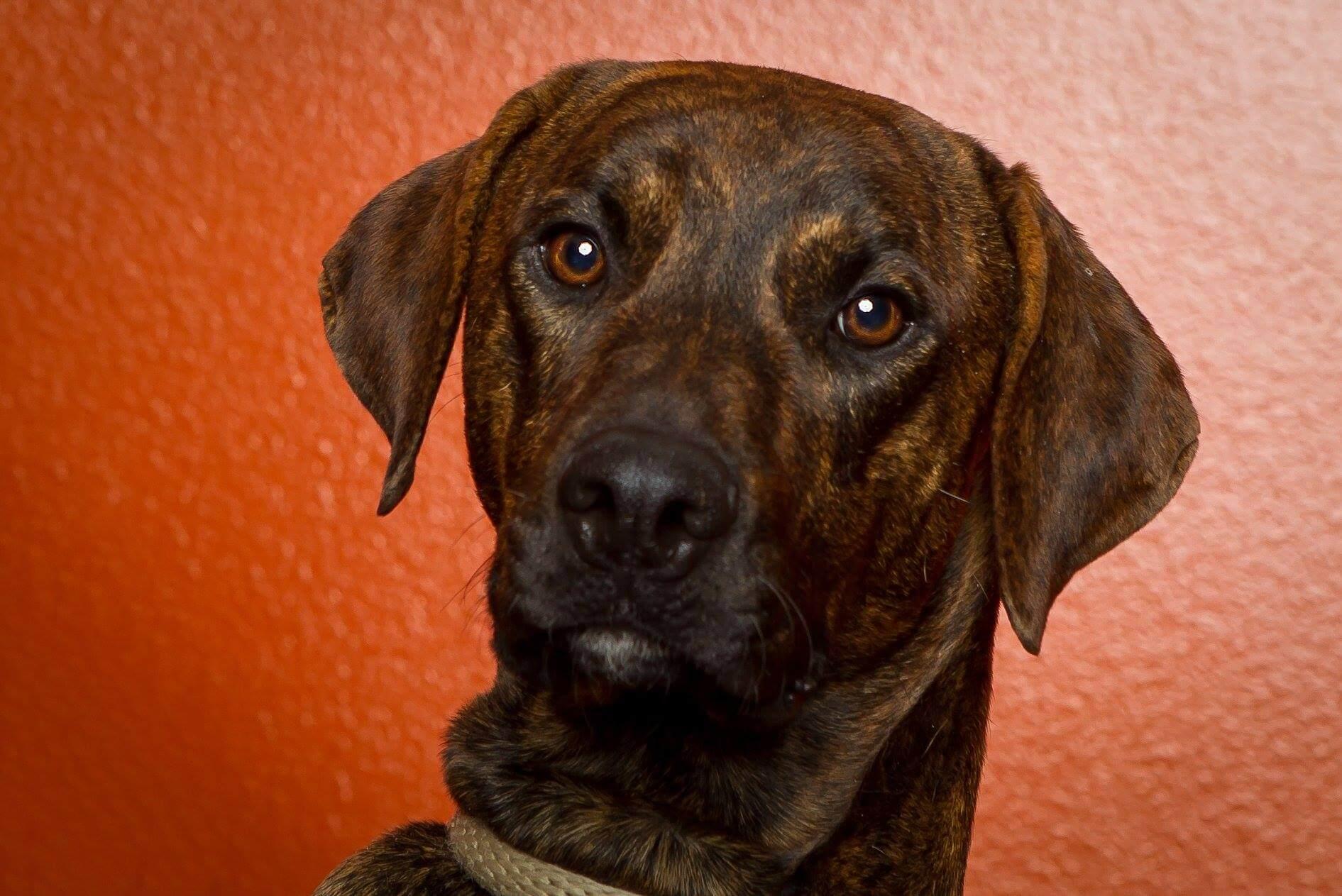 WAGS dog Camo needs foster