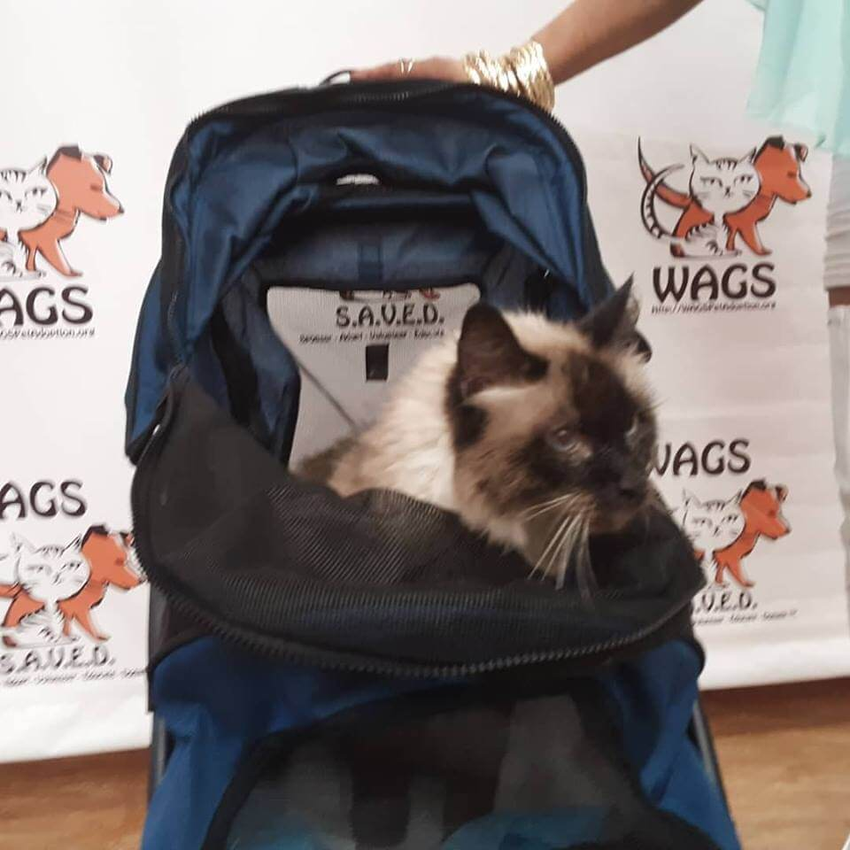 adopted cat in the backpack WAGS