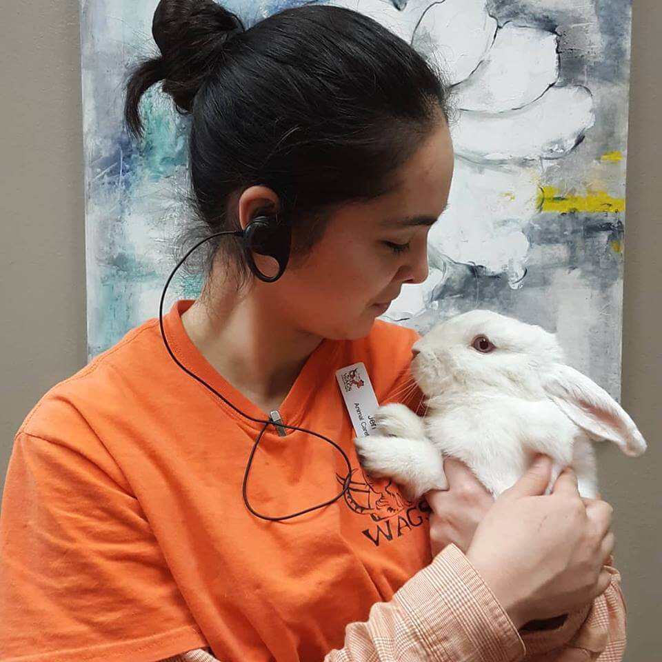 WAGS staff and rabbit for adoption
