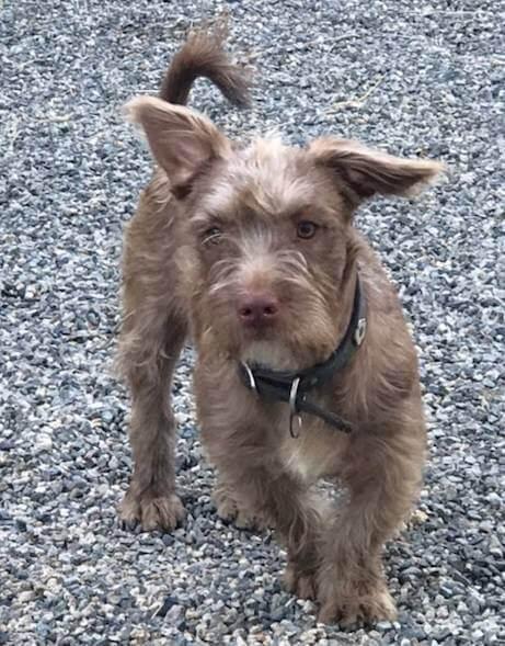WAGS Meet Paddington dog