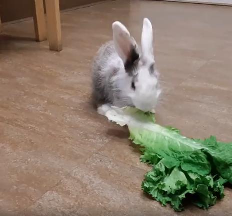 olaf bunny WAGS
