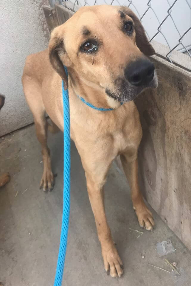 scared dog girl is for adoption WAGS