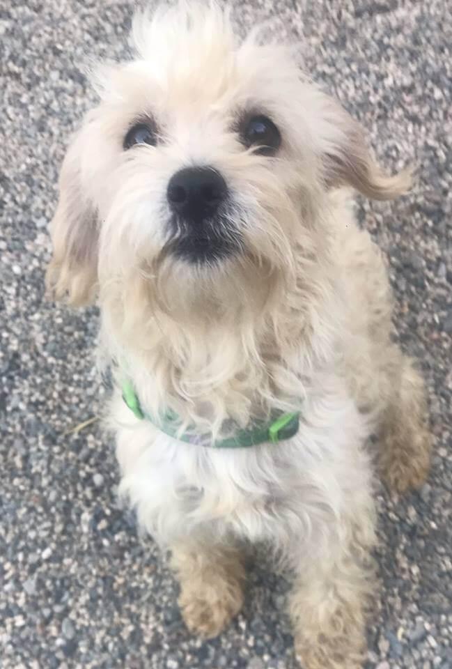 Clooney dog WAGS adoption