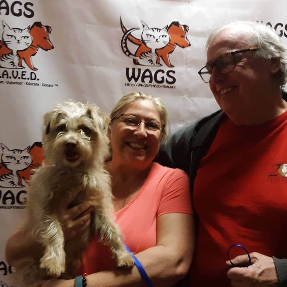 old couple adopt a dog WAGS