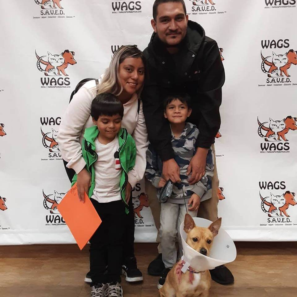 lucky dog found new family WAGS