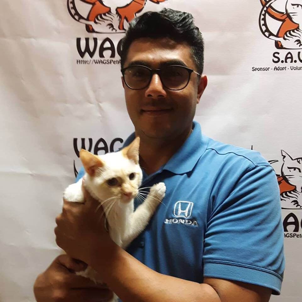 great love cat adopt at WAGS