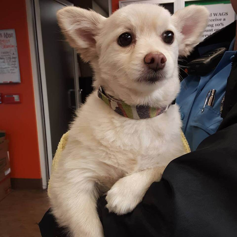 lost dog found by WAGS at Walmart