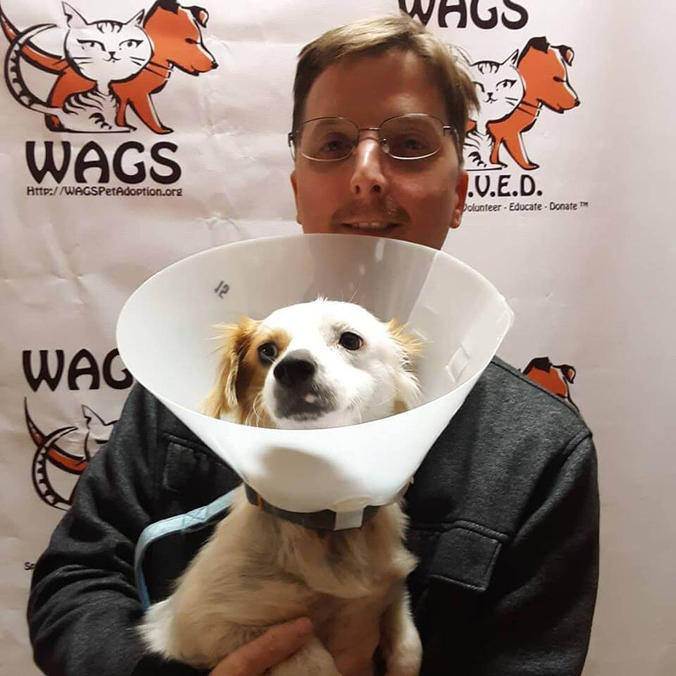 WAGS dog feather adopted today