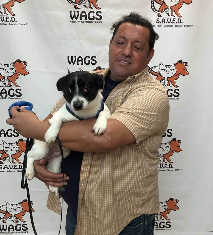 lovely dog adopt new owner WAGS