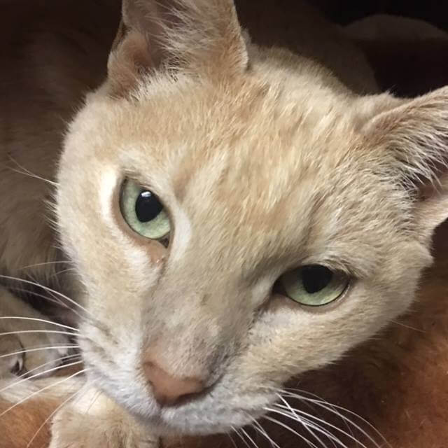 need foster home senior pet cat WAGS
