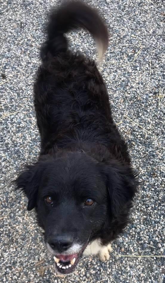 WAGS dog Mulligan