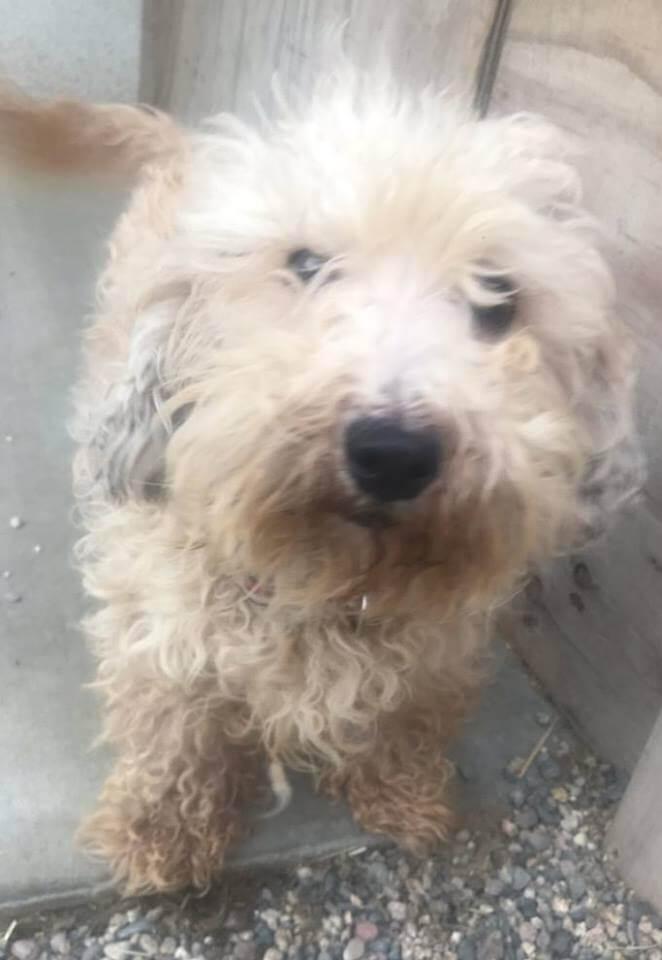 WAGS dog Ariba for adoption