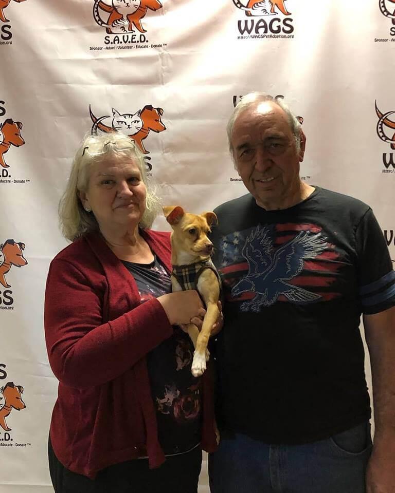 elderly couple adopt cute little dog