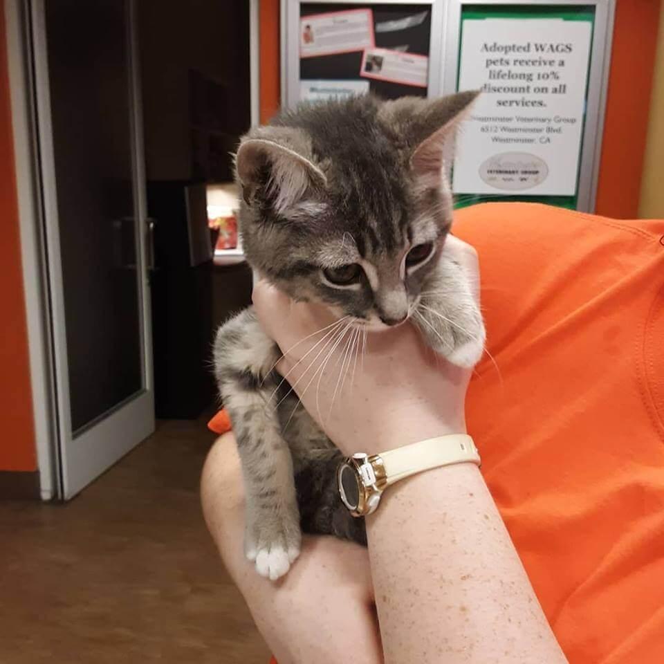 little kitten were now adopt