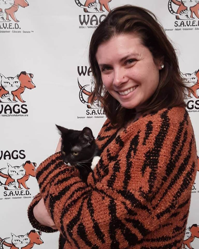 lovely kitten is now adopted WAGS